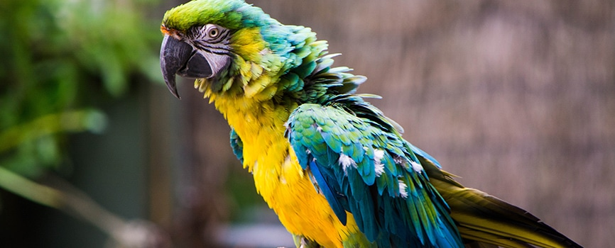 Bird Kingdom Niagara Falls