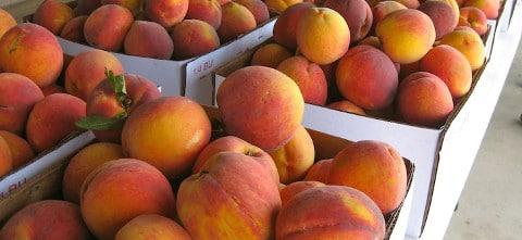 Niagara Peach Festival