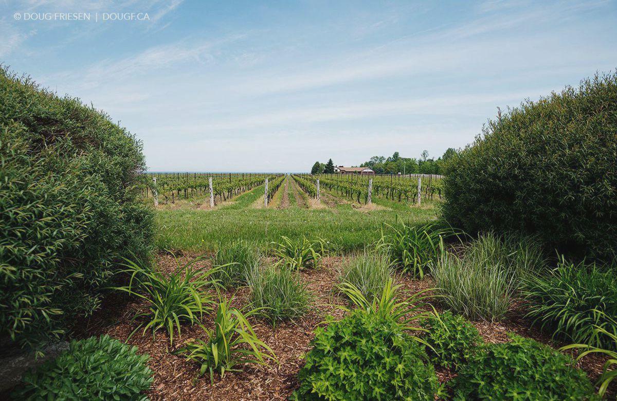 Niagara on the Lake Winery Field