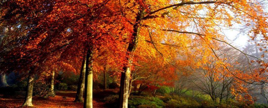 3d-abstract_widewallpaper_autumn-trees_37053.jpg