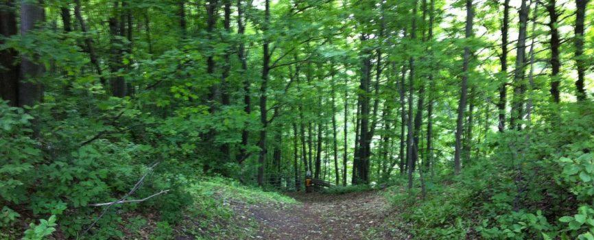 Bruce Trail Niagara Region