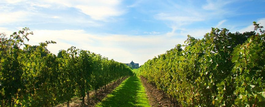 Top Three Picturesque Niagara Wineries