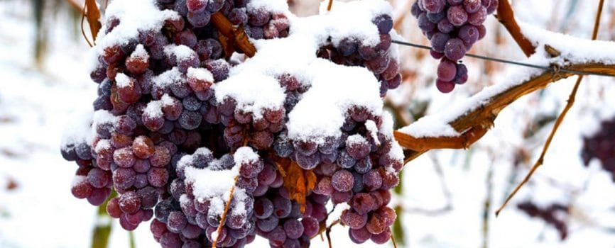 Niagara Ice Wine